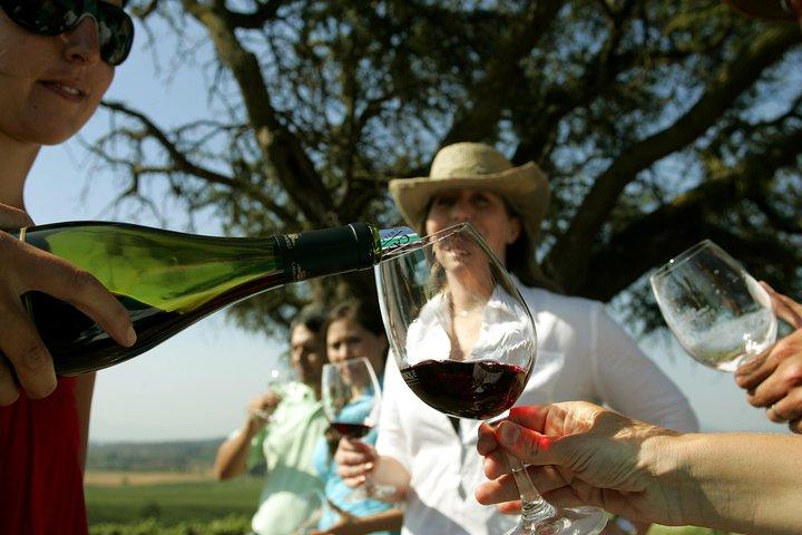 PRIVATE TOUR: Pre or Post Cruise Santiago City Tour and Undurraga Winery