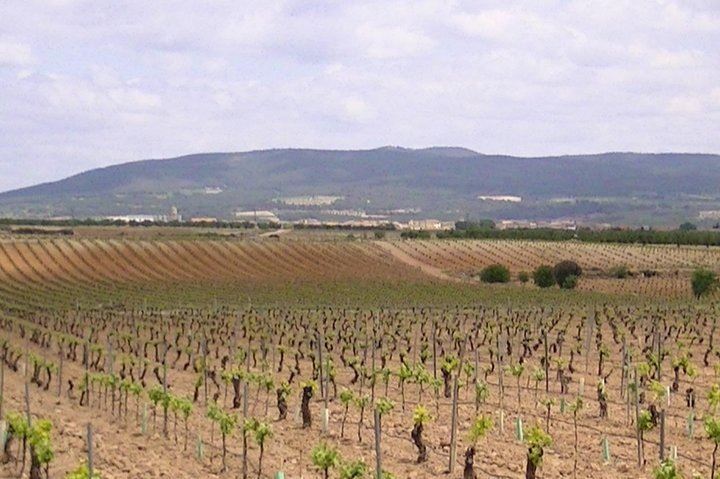 Wine and history in Requena-Valencia