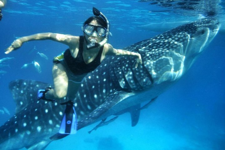 Snorkel with a whale shark