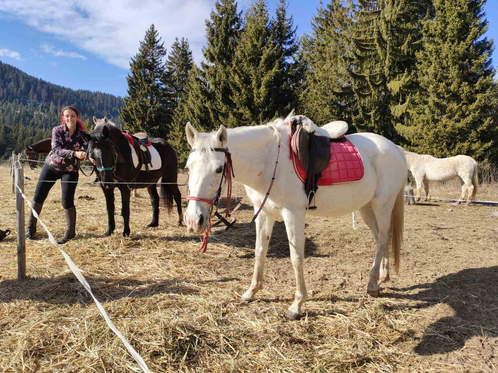 Befriend horses on this trip