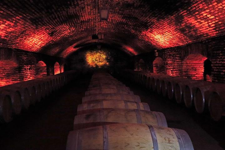 Small-Group Half-Day Concha y Toro Vineyard Tour with Transportation