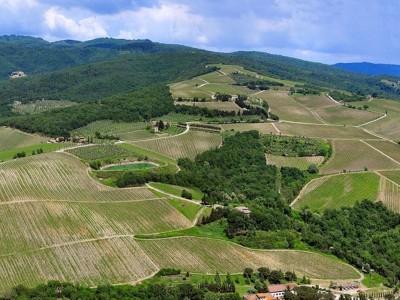 Wine tasting and lunch at Monterinaldi