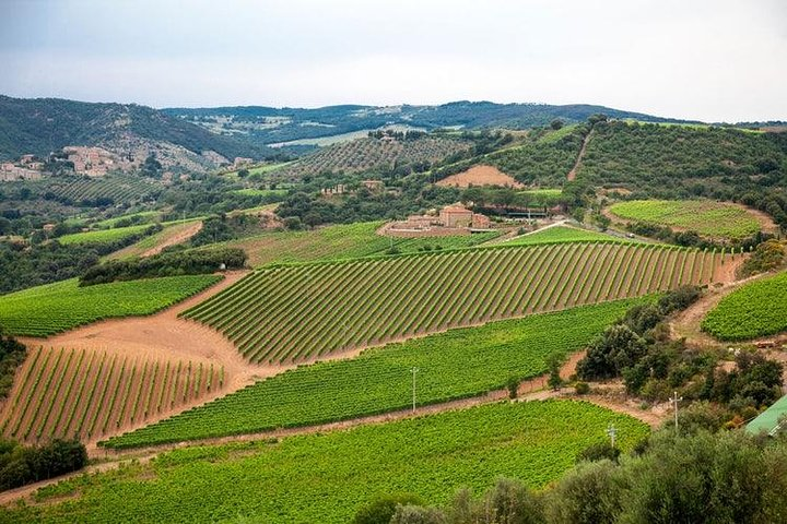 The Complete Wine Tour Montalcino Montepulciano and Chianti Full Day
