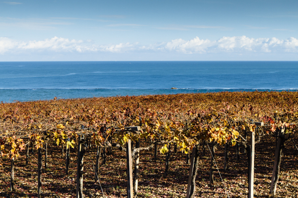 Visit the winery, stroll through the vineyards, taste the Cantine Mucci Wine