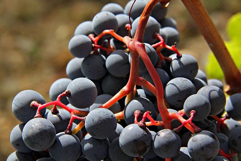 Monterinaldi wine tour and tasting