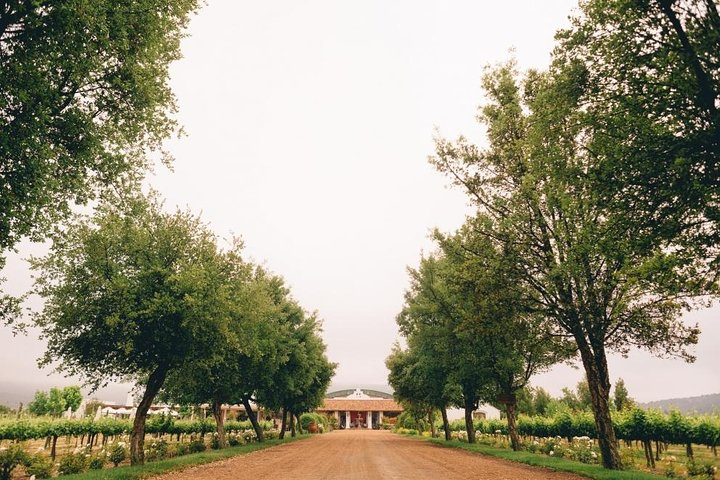 Private Full Day Guided Trip to Casablanca Valley - Visit to 2 Vineyards