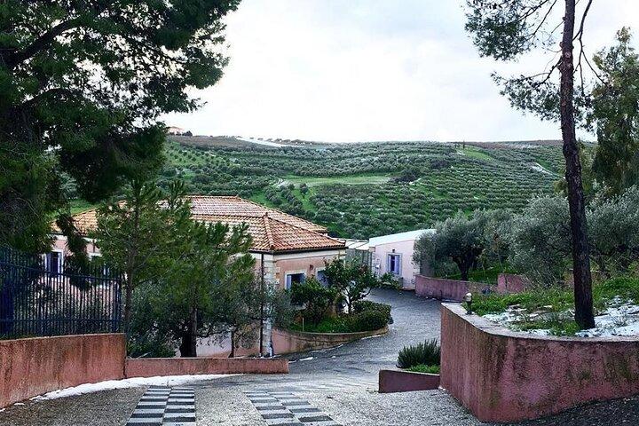 Private Olive Oil Tasting Tour @ Koronekes Organic Family Olive Oil Mill