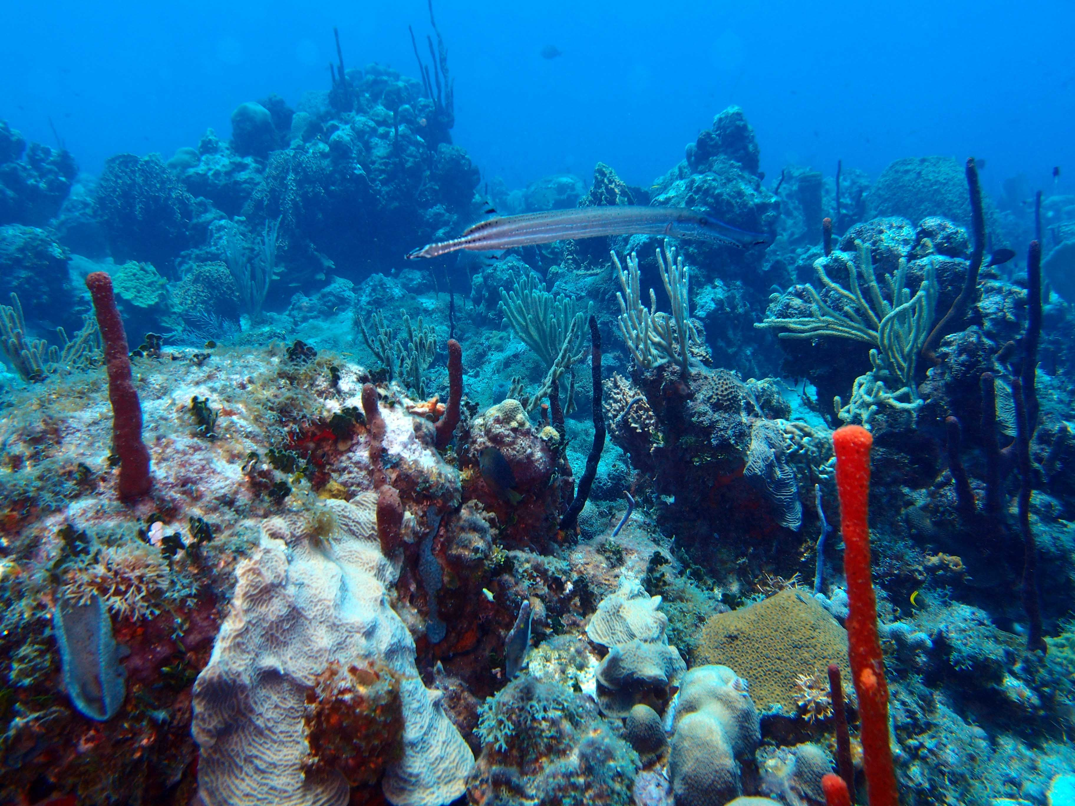 """Visit """"The Wall"""" Coral Reef"""