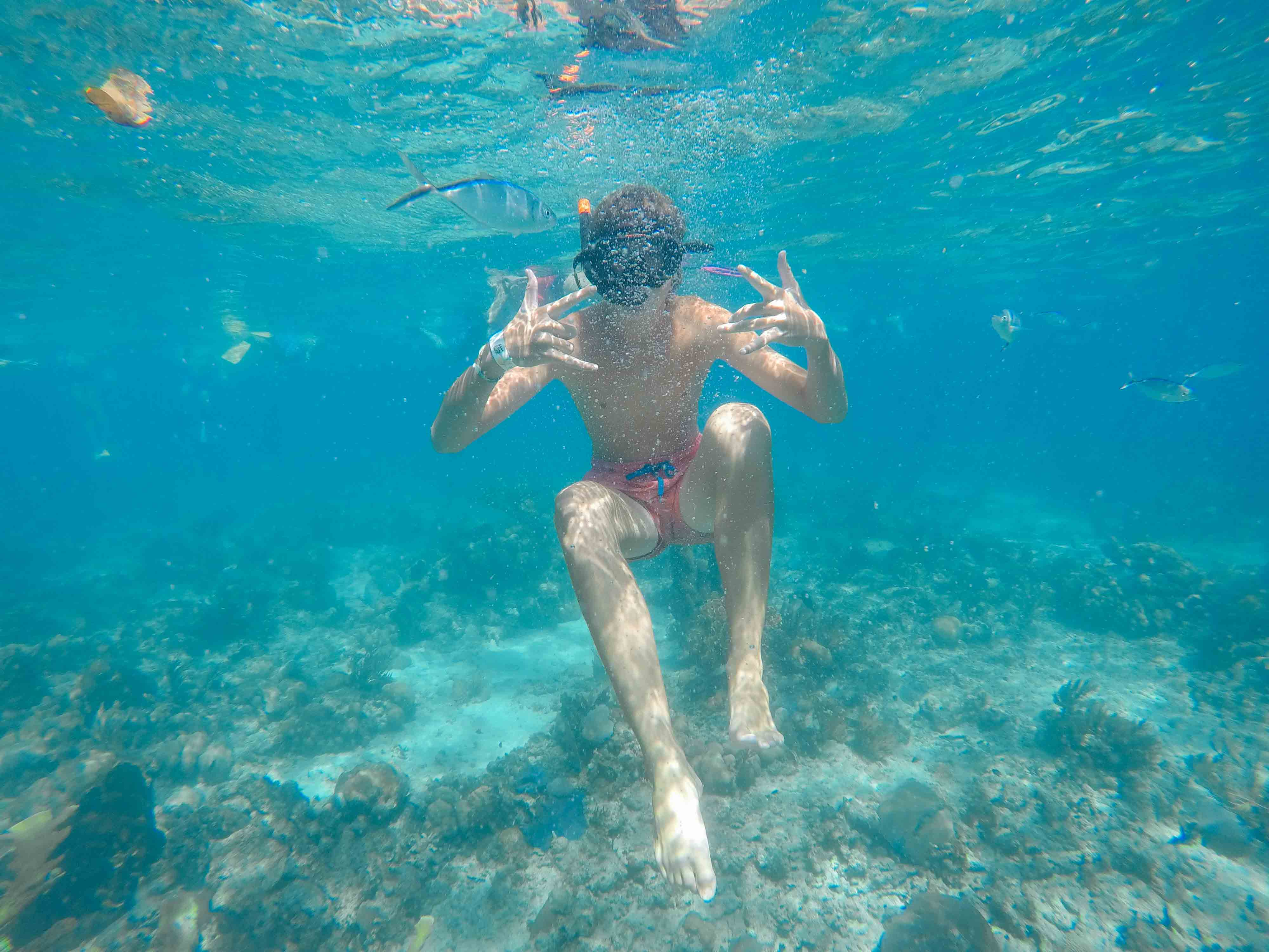 Dive into the waters around Catalina Island