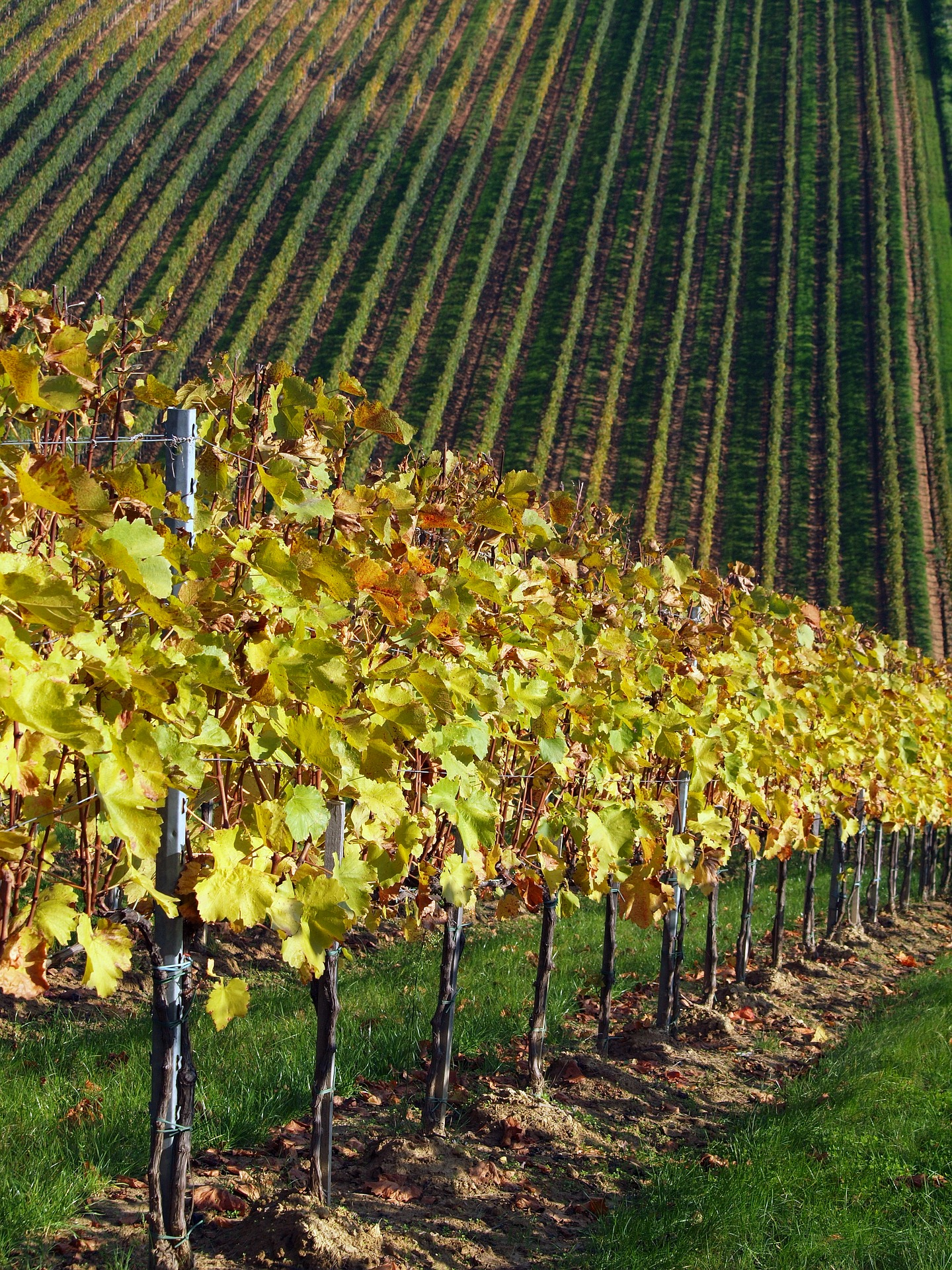 Villany wine region and Pecs private tour from Budapest
