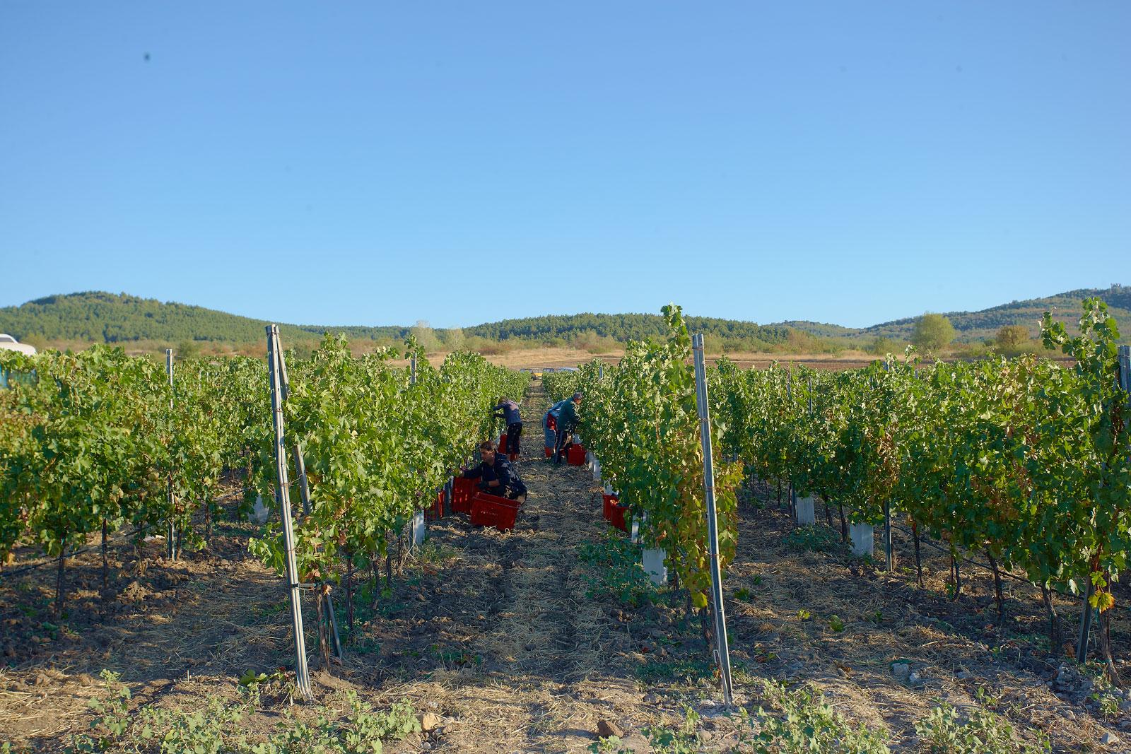 Take in the vineyards