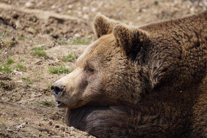 Libearty Bear Sanctuary Zarnesti