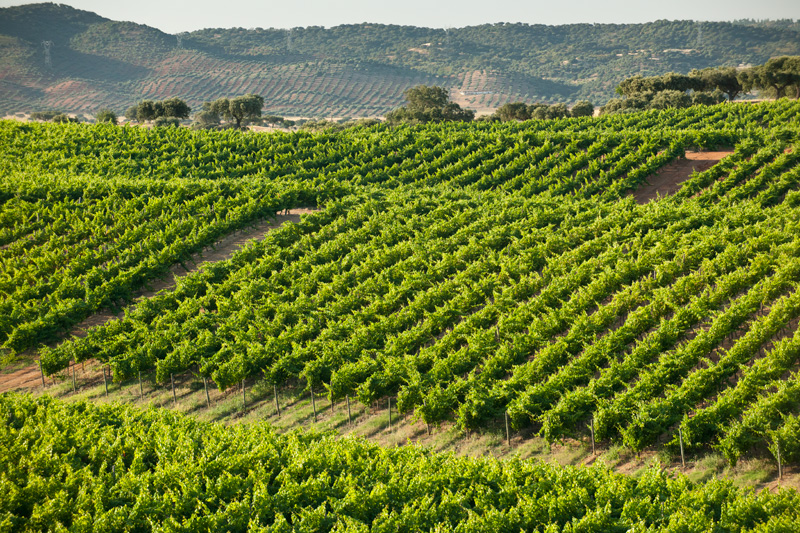 Wine and Food Tour of Alentejo from Lisbon