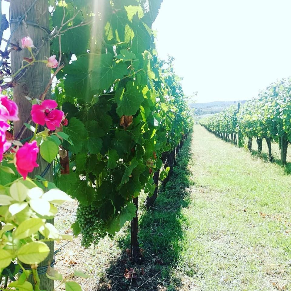 1/2 Giornata Chianti Wine Tour