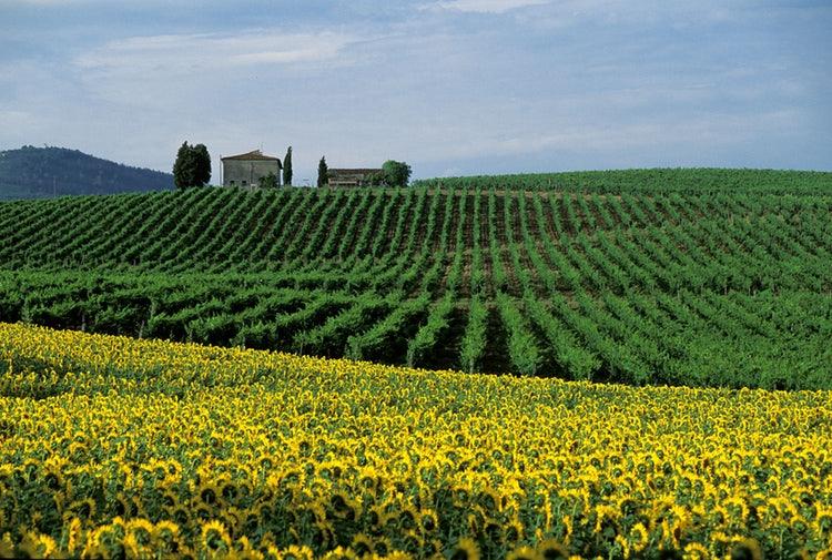 GREAT CHIANTI WINE PRIVATE TOUR