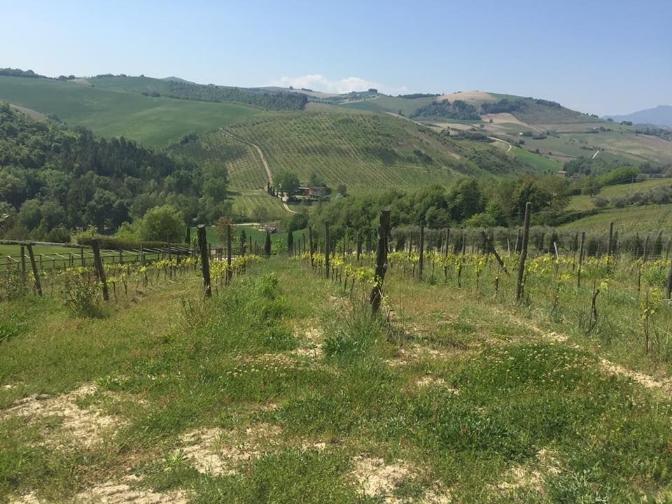 Marche wine day tour from Ascoli Piceno