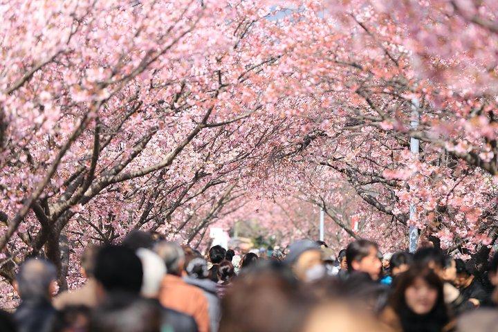 Tokyo Spring Daytime (Cherry Blossom) Food Tour