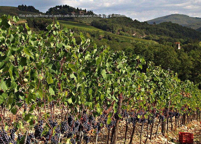 Be a winemaker for a day at Monterinaldi in Tuscany
