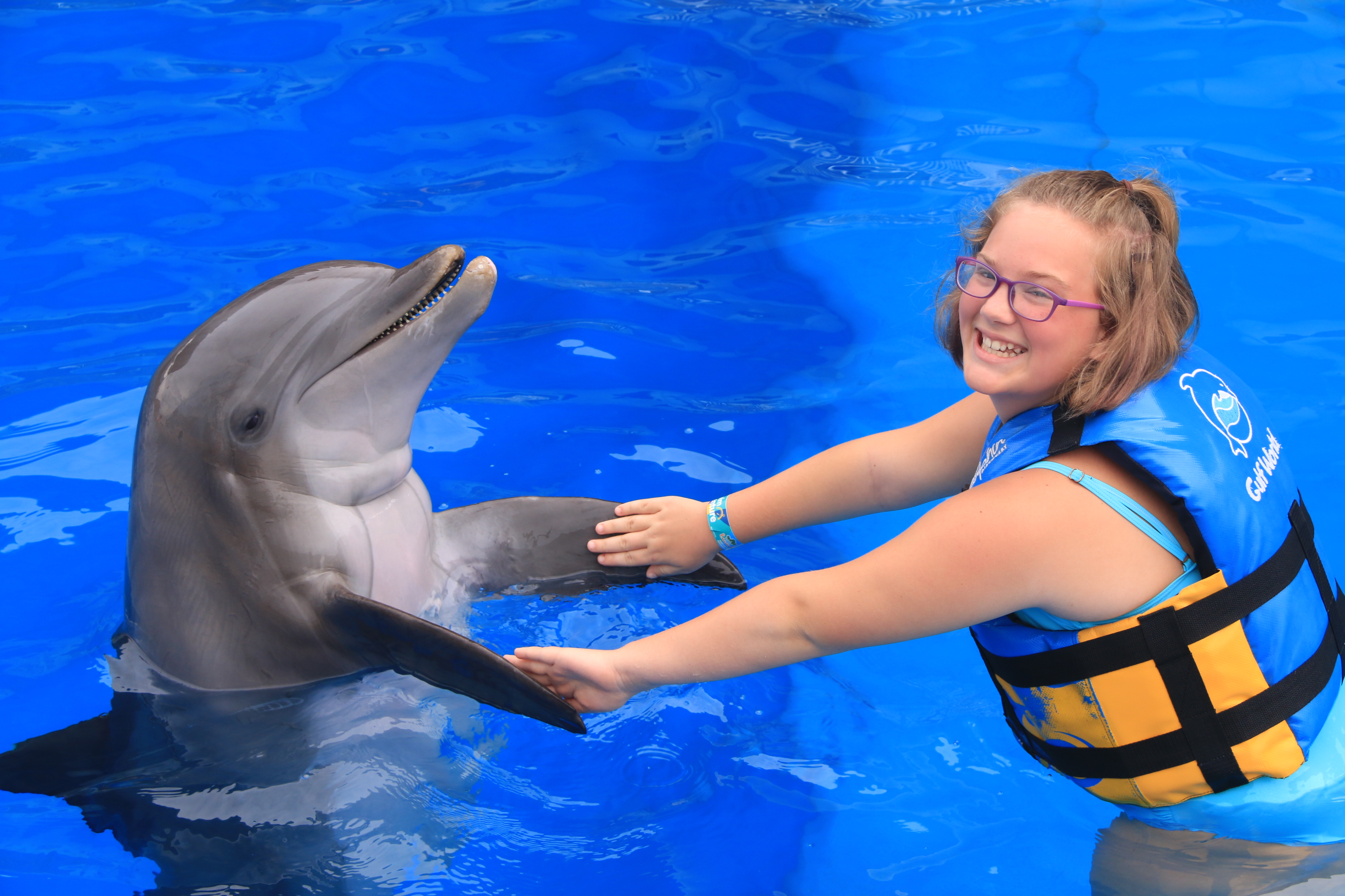 Befriend dolphins on this tour