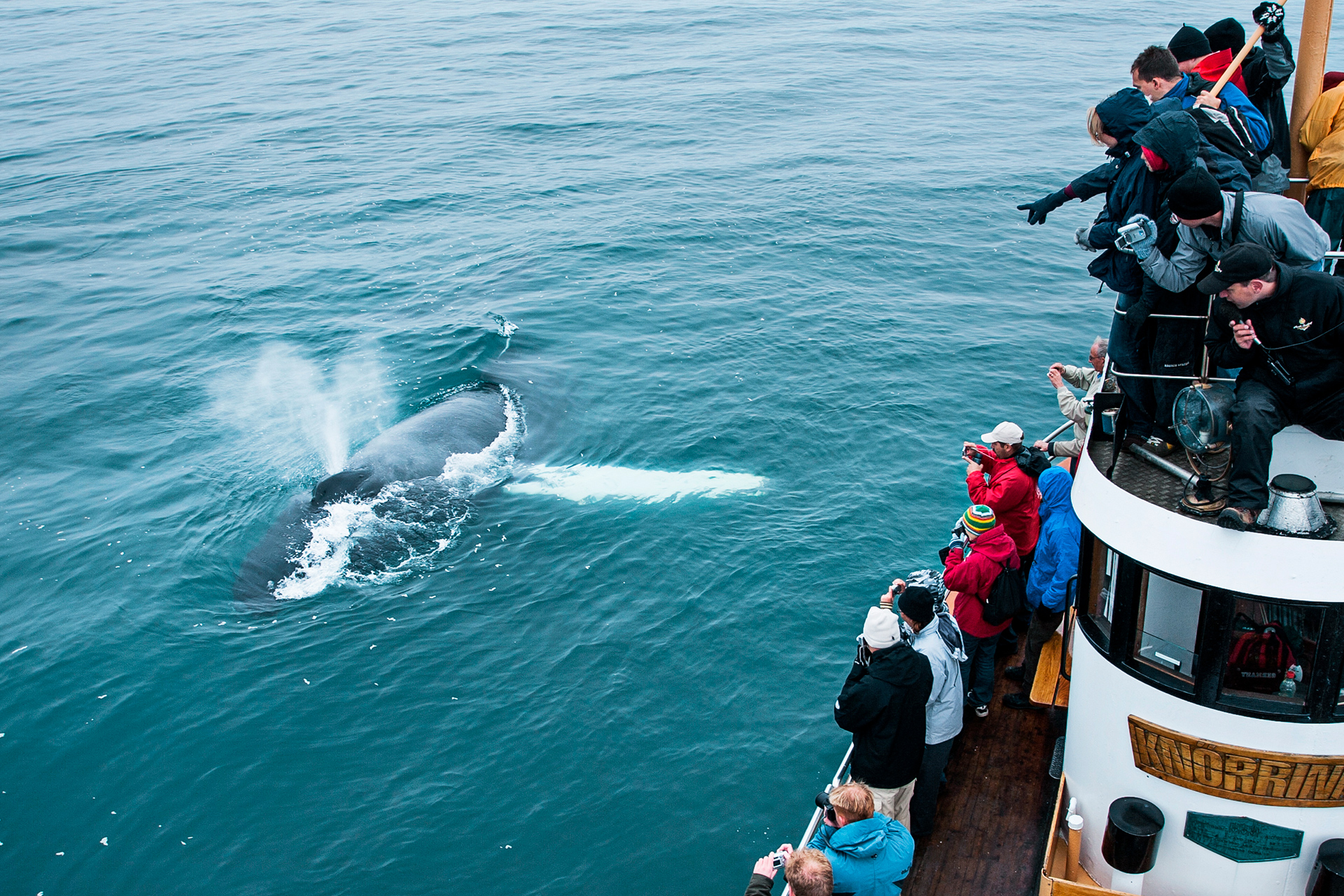 Whale Watching from Hjalteyri
