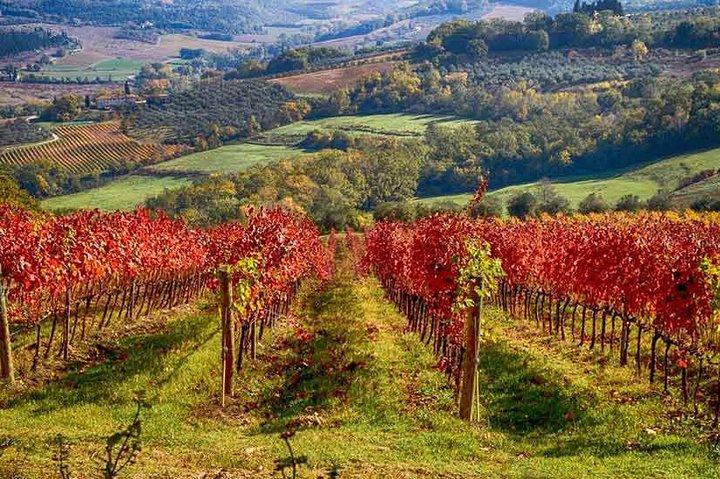Tuscany Landscapes, Castels & Chianti Wine District