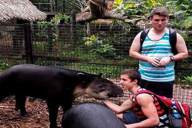 Meet the zoo animals