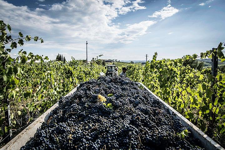 Escorted Tour: Chianti Winery, Montefioralle, and Greve in Chianti