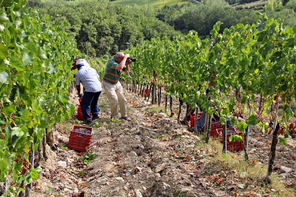 Educational Vineyard at Monterinaldi
