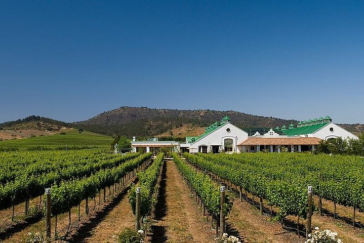 Half Day Trip to Casas del Bosque Vineyard from Santiago - Wine Tasting Included