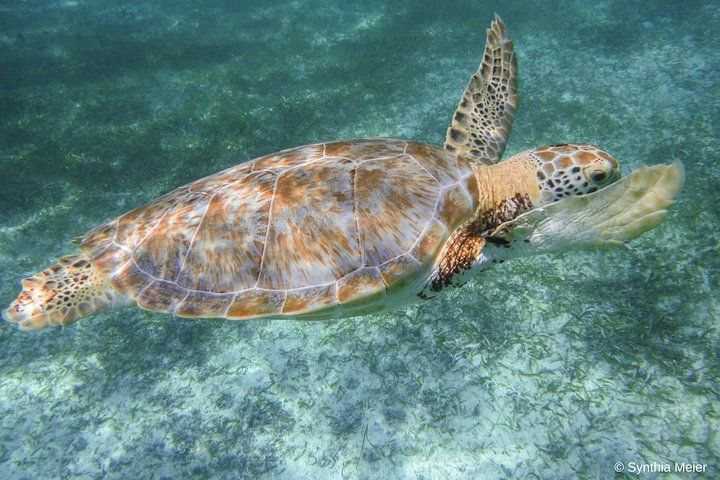 Meet stunning turtles