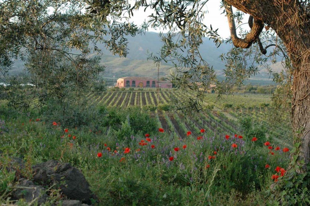 Wine Tour & Picnic in Sicilian vineyards!