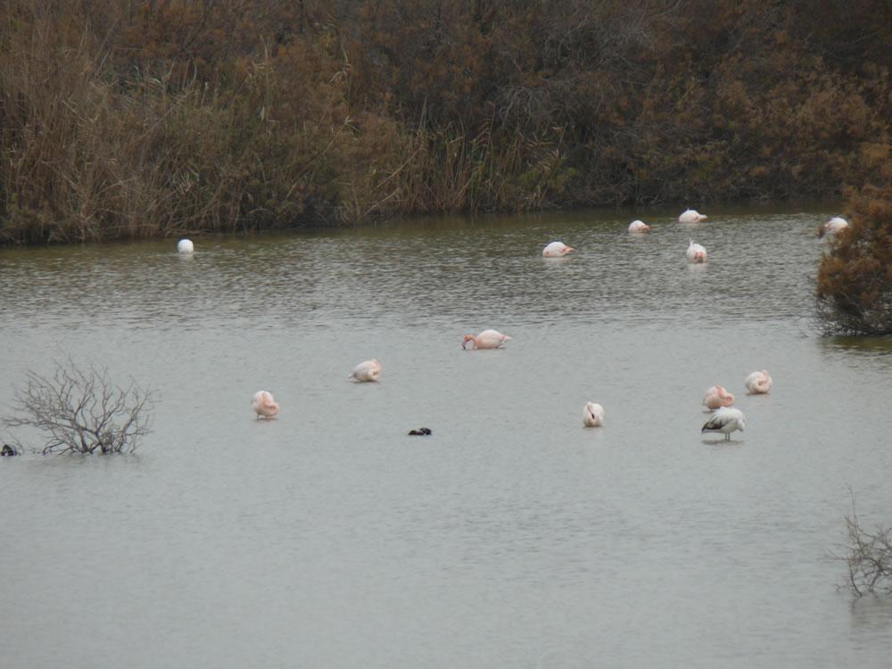 Visit the lake for bird watching