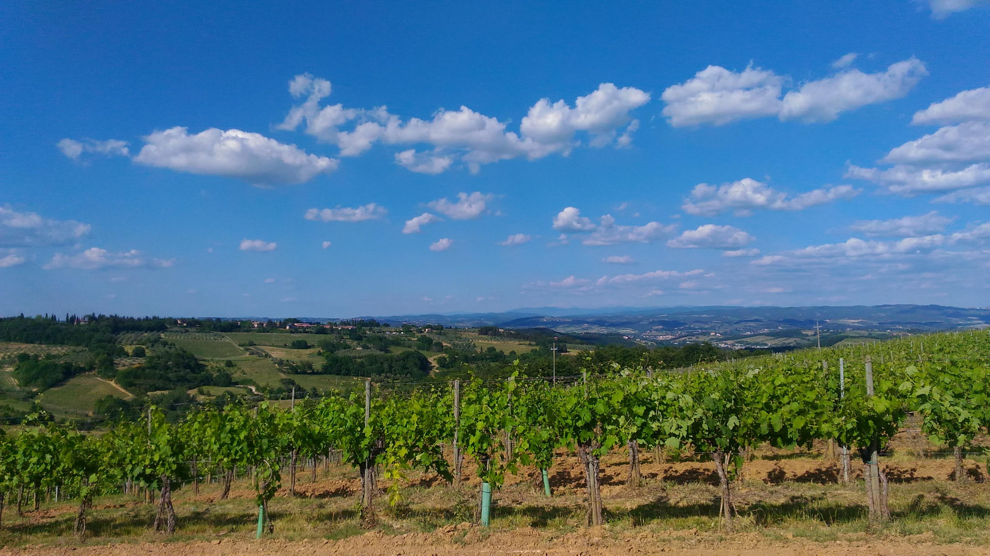 Hiking Around The Tower of San Gimignano Including Wine Tasting