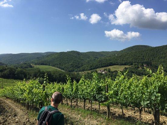 Hike & wine tasting experience at Monterinaldi Winery