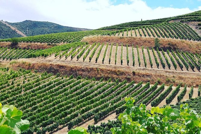 Learn about the local wine production