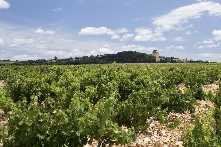 Rhone Valley Wine Tour from Avignon: Chateauneuf-du-Pape and Tavel