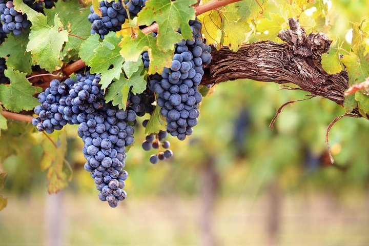 Private Full Day Tour: Three Wineries Plus Lunch