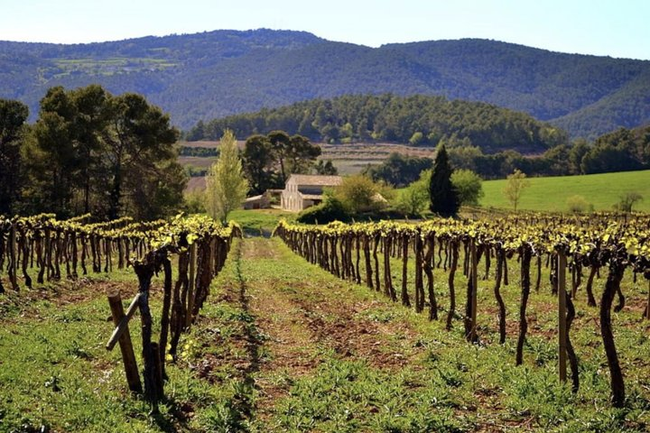 Private Full Day Tour: Montserrat & Organic Winery Plus Lunch