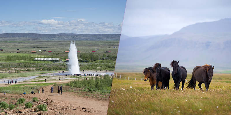 Come for Viking Horses & Geysers