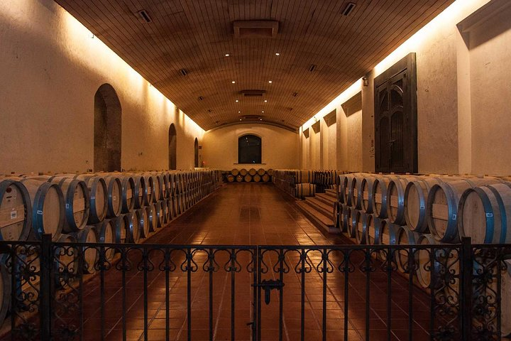 alf Day Trip to Concha y Toro Vineyard from Santiago - Wine Tasting Included