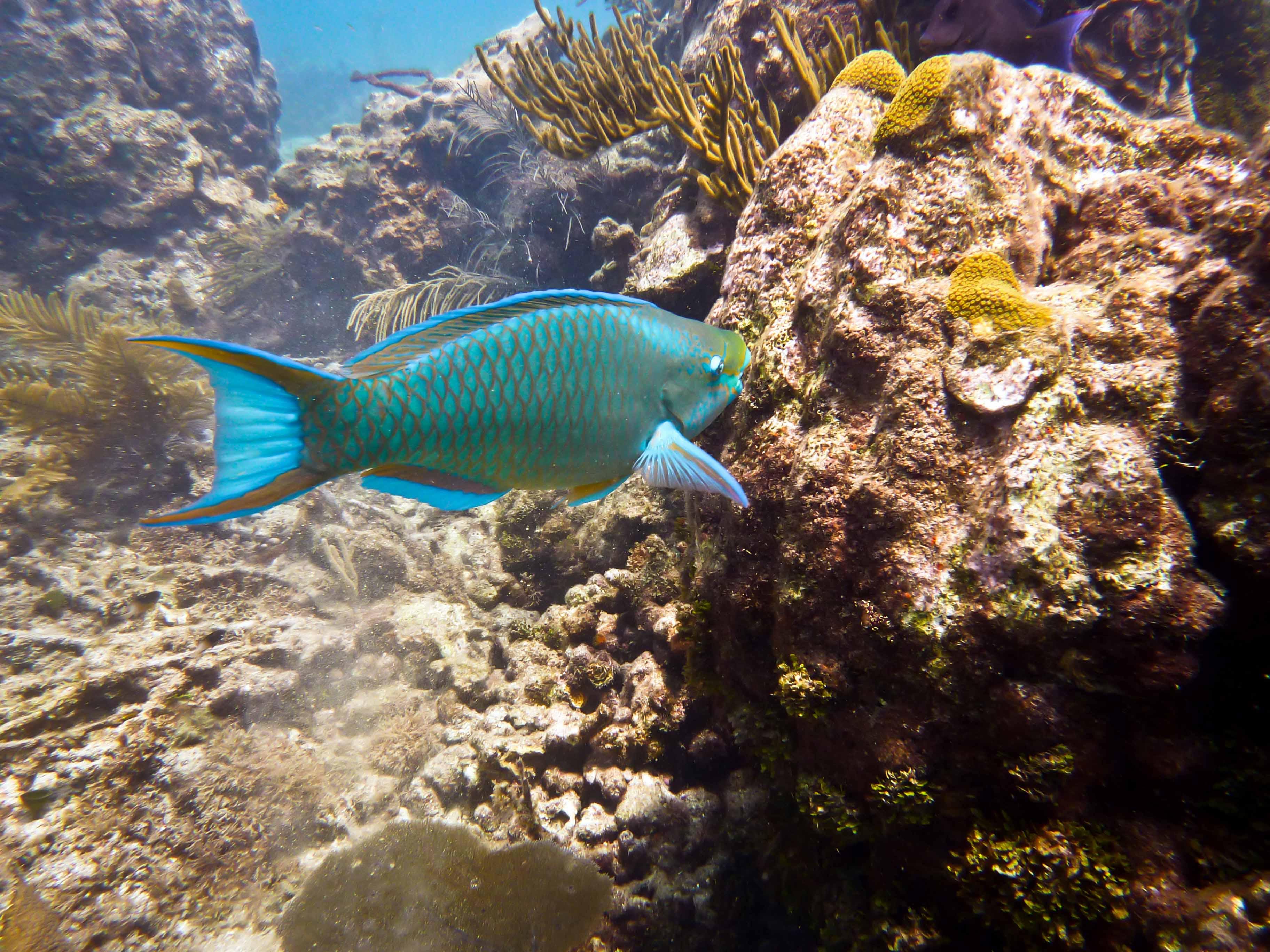 Discover the aquatic life.
