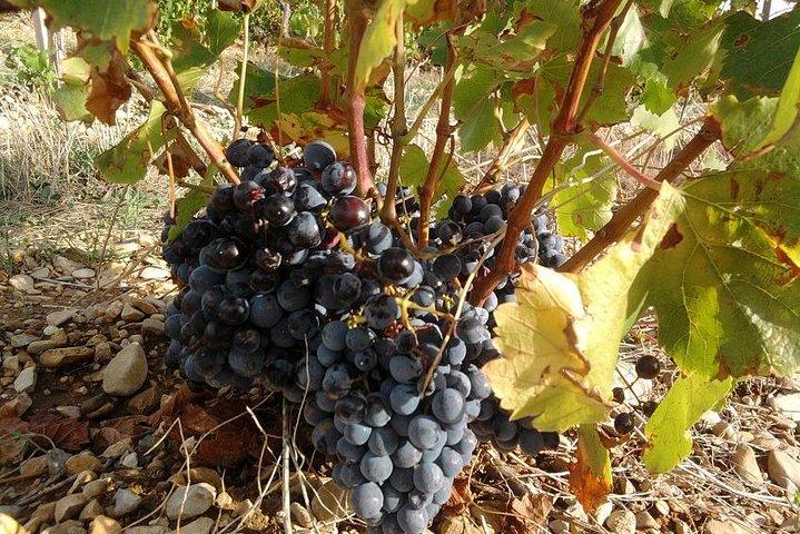 Marseille Shore Excursion : Avignon & Chateauneuf du Pape Wine Tour