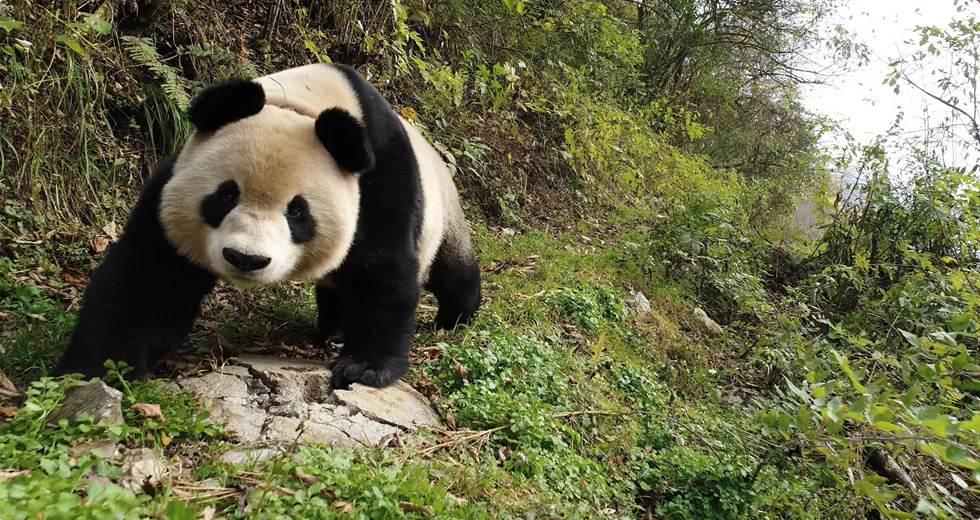 Meet pandas at the center