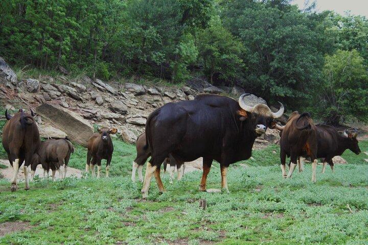 Safari in Pench National Park