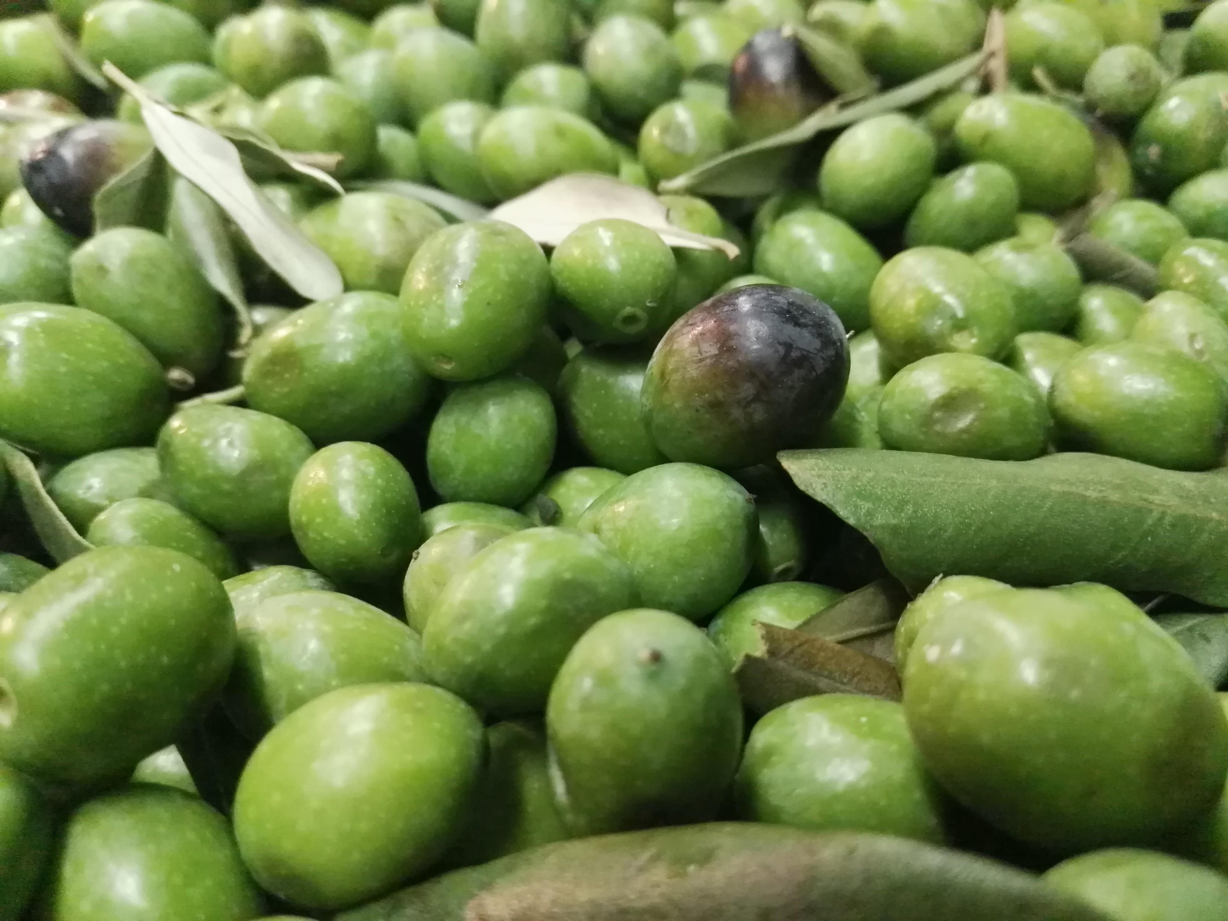 Olive oil tasting in Abruzzo.