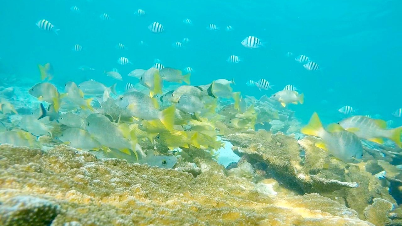 Snorkel with the marine life