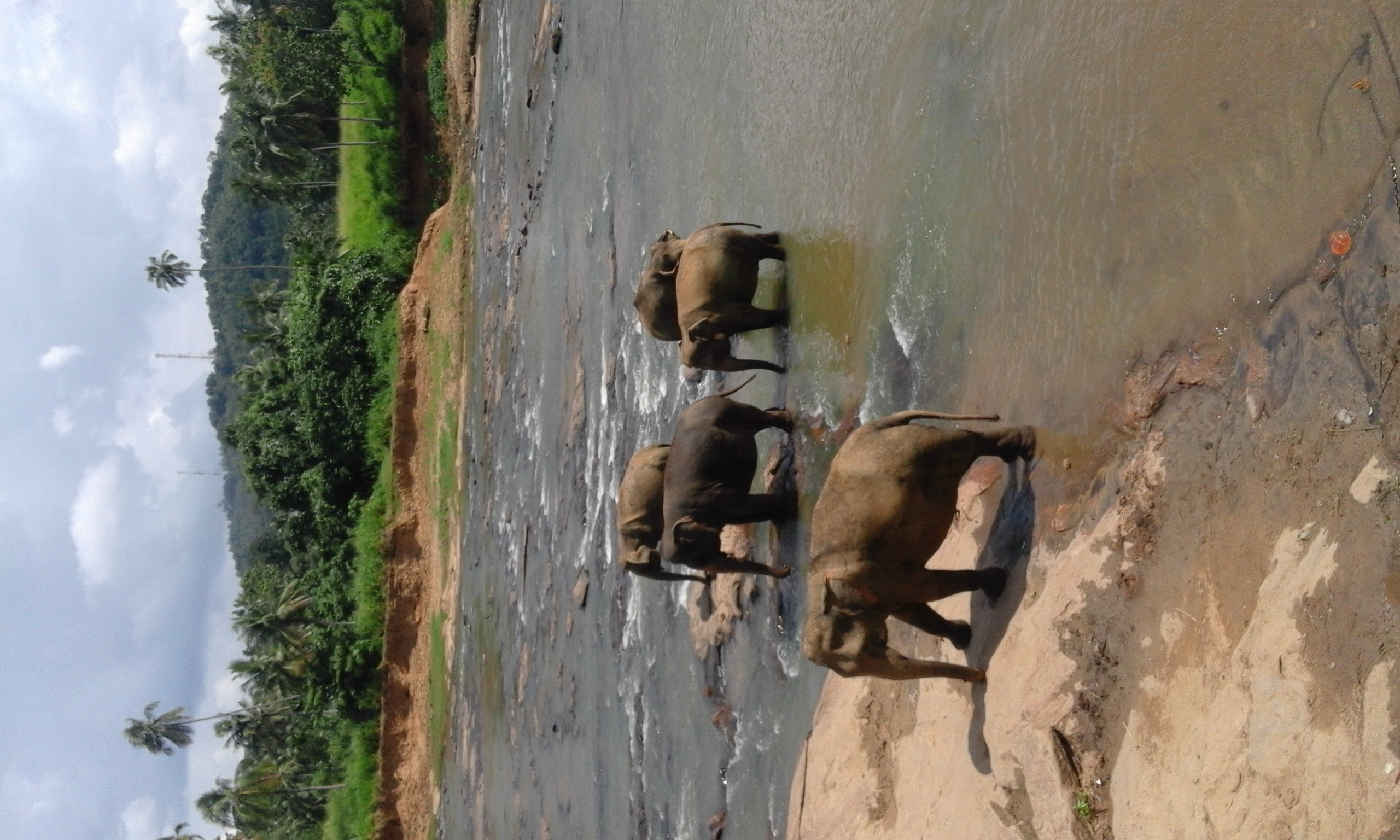 Befriend elephants in Pinnawala