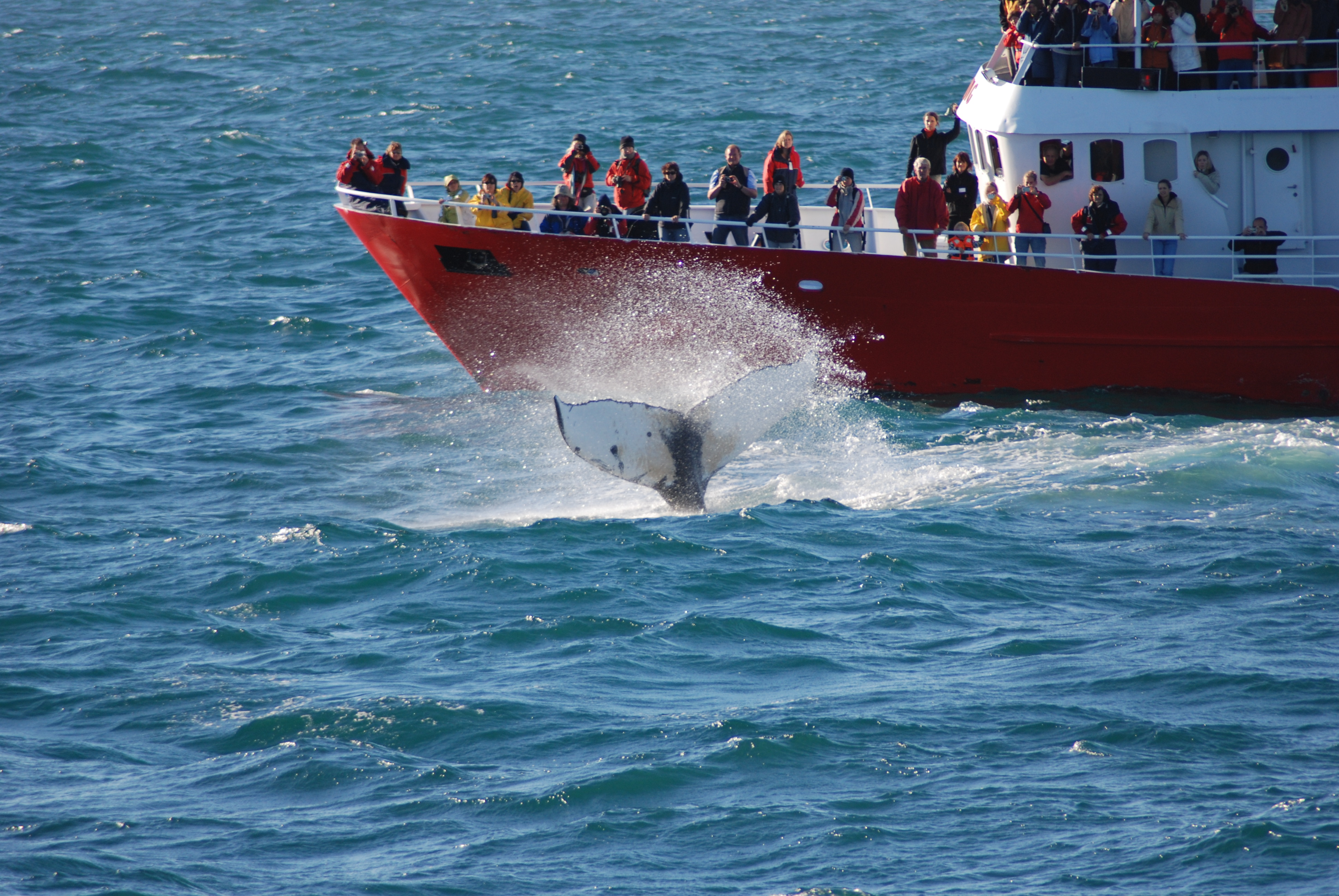 Get to see the whales up close.