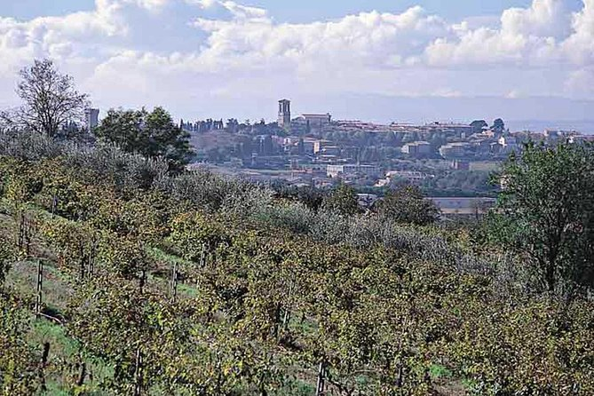Half Day: Wine and Olive Oil Tour from Assisi