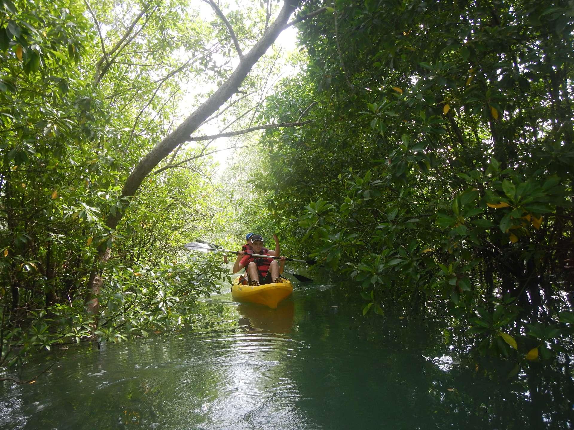 Kayak through the waters of Jelutong.